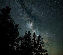 Joe Garza Milky Way trees