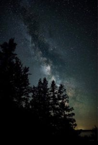 Milky Way over Headlands old growth forest by Joe Garza